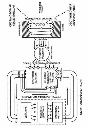 Модель функциональной системы