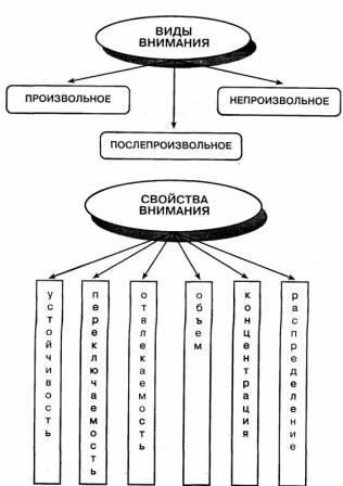Разделение психикина произвольноепсихические познавательные процессы память, внимание.