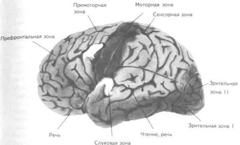Органы чувств и равновесия поведение