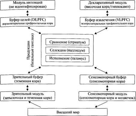 Нейрофизиологическая