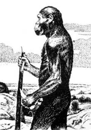 Схема антропогенеза.  Небольшой грызун приматы Африканская высшая обезьяна (парапитек) Гиббоны Орангутаны Дриопитеки...